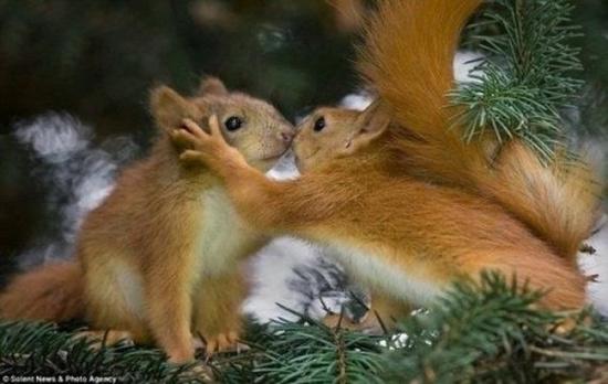 一些可爱的小动物:)